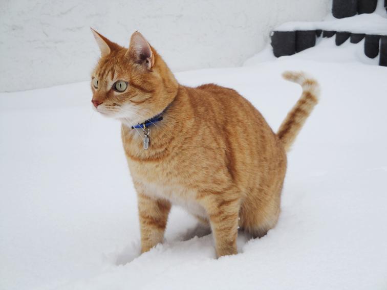 Rookie the snowcat