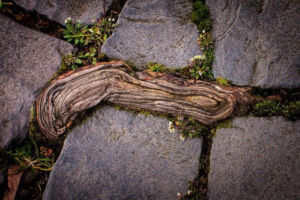 Root & Cobbleds