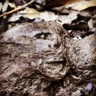 Root-Face