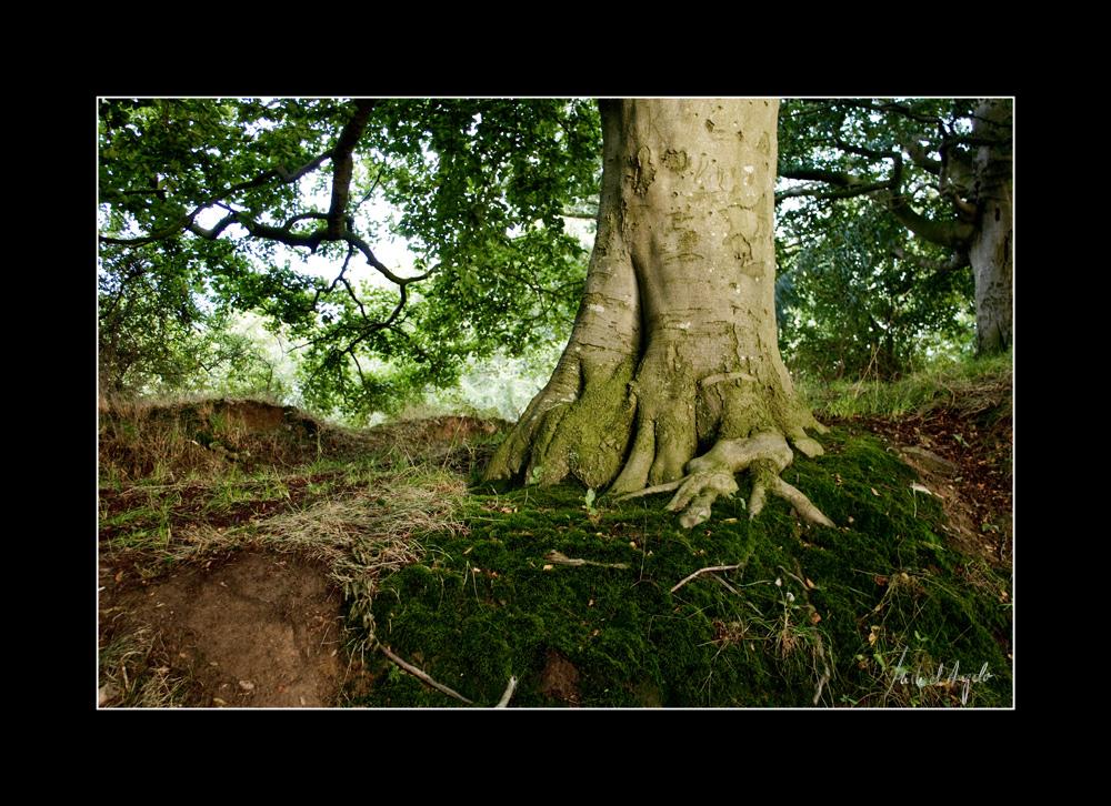Roots - Wurzeln