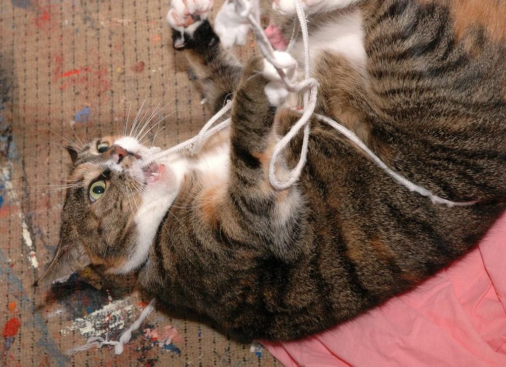 rope-pulling Mozes