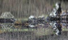 Rorschach du lac