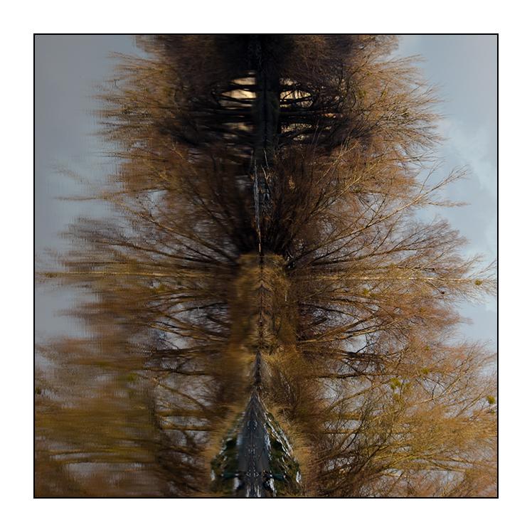 Rorschach-Test (Natur-Version)