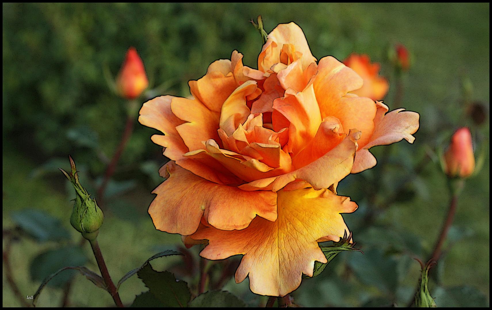 ...rosa...