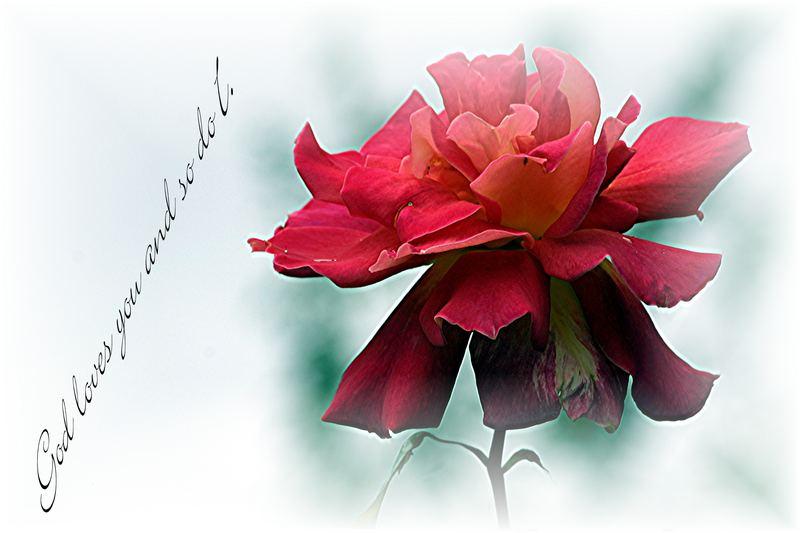 Rosa Divina