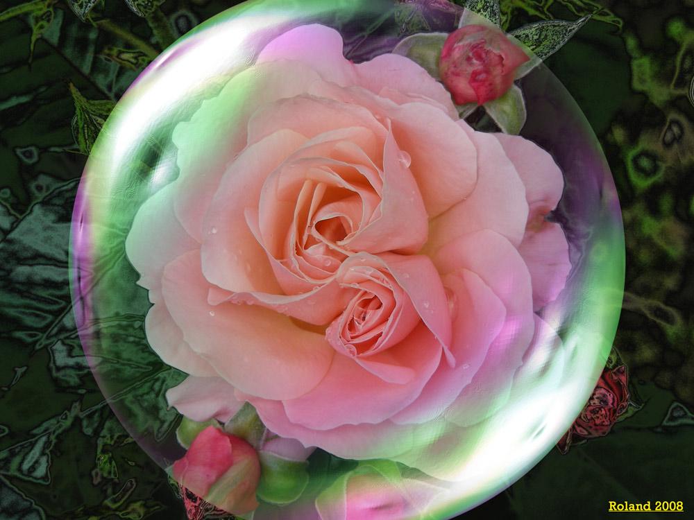 Rosa e Rosina