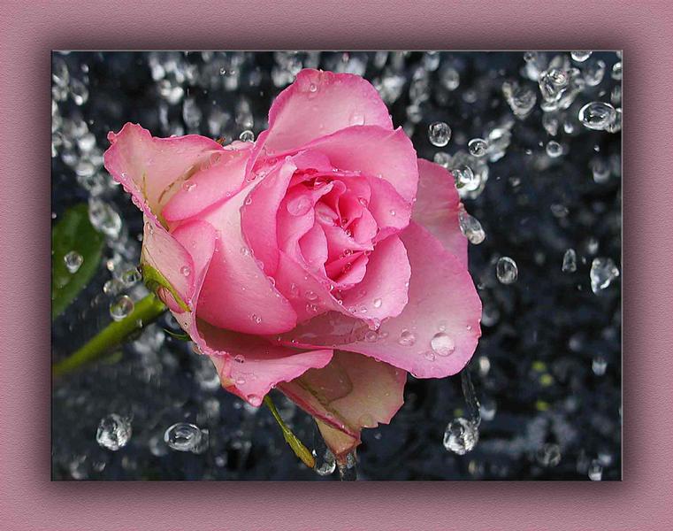 Rosa heute und  mit....