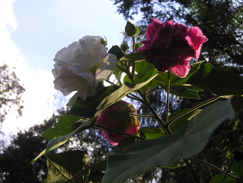 Rosa Mística II
