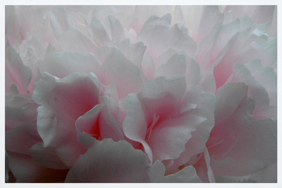 Rosa Pfingstwölkchen