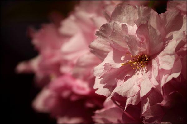 rosa rosa rosa...
