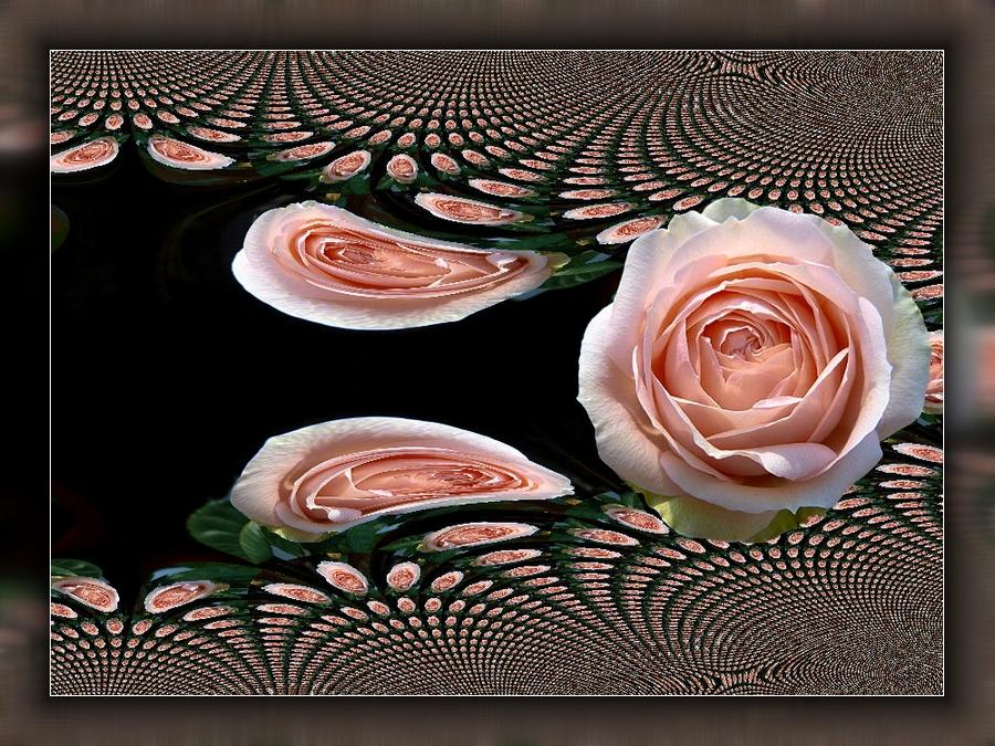 Rosa Rose.
