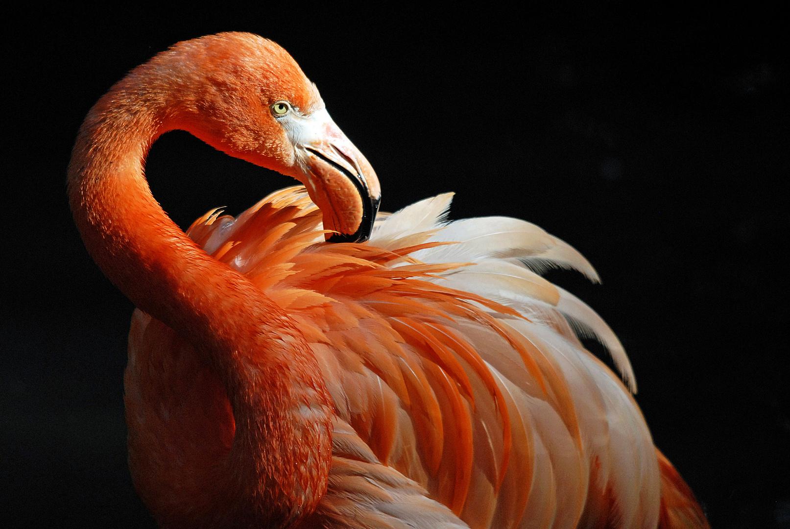 rosa-rote Schönheit