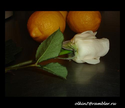 Rosa the lemons