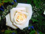 Rosa......bianca