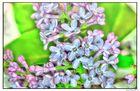Rosablaue Blüten HDR 2013