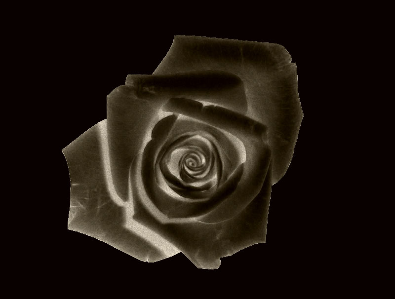 Rosa...........nera