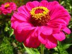 rosarot und im Garten