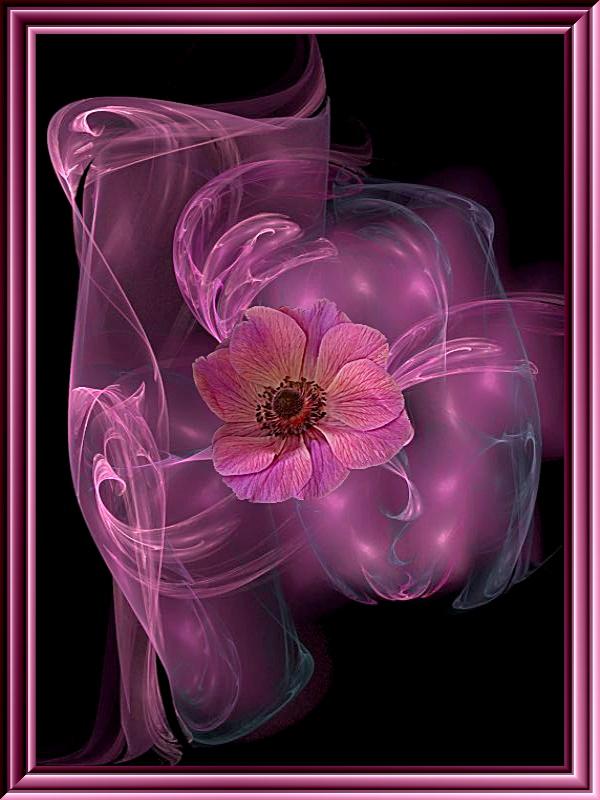 rosarote Träume