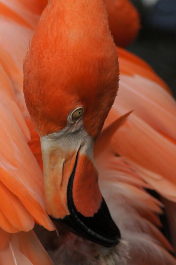 rosaroter Vogel