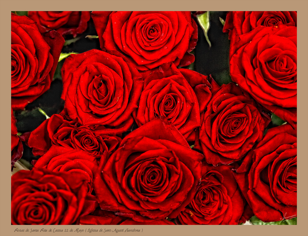 Rosas de Santa Rita de Cassia 22 de Mayo ( Iglesia de Sant Agustí Barcelona)