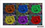 Rosas Fantasía para mi madre