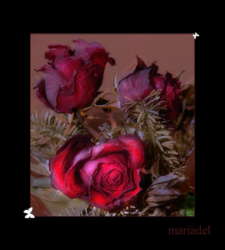Rosas nostálgicas (Quiero regalarte..)
