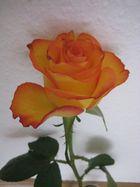 Rose 001