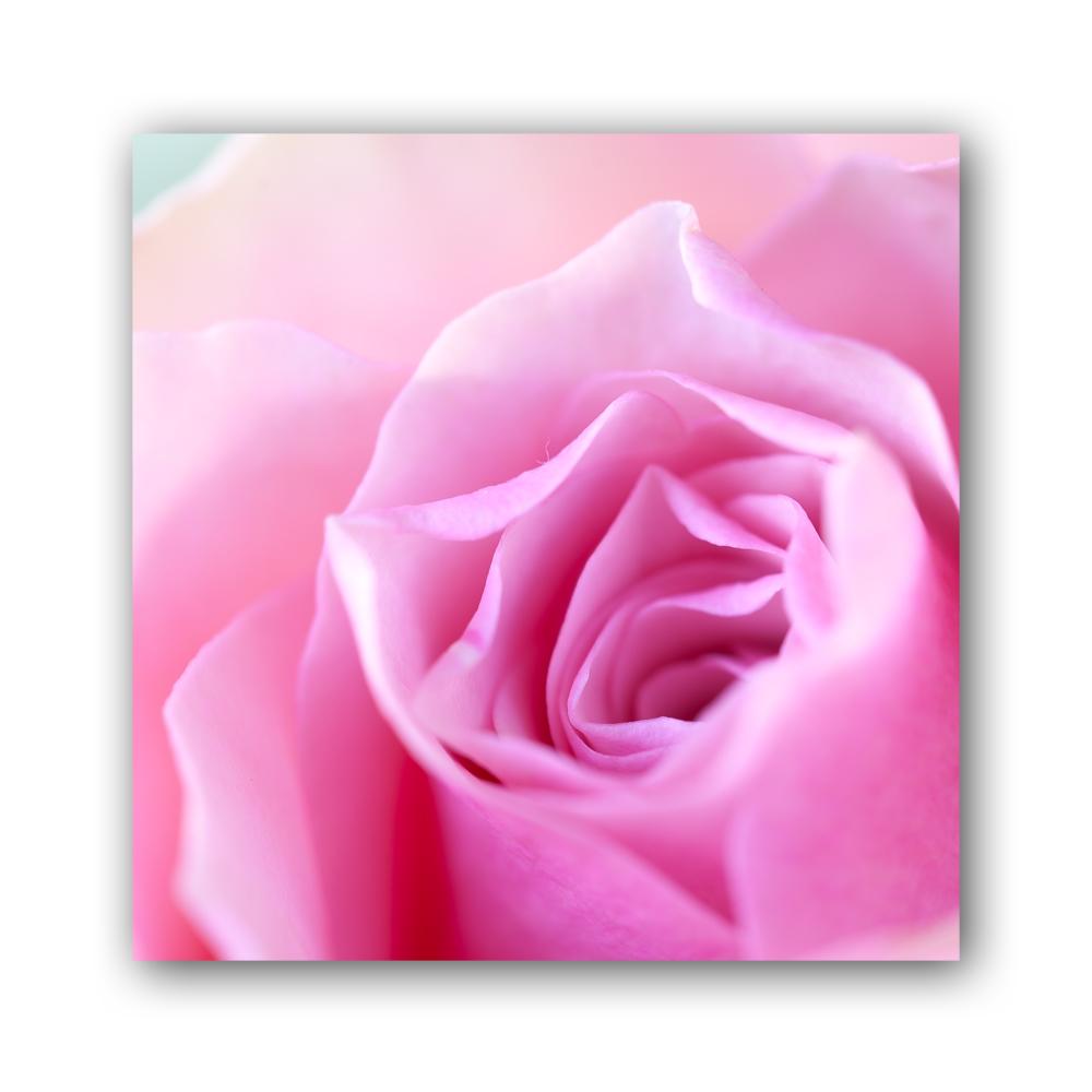 Rose 2013 II
