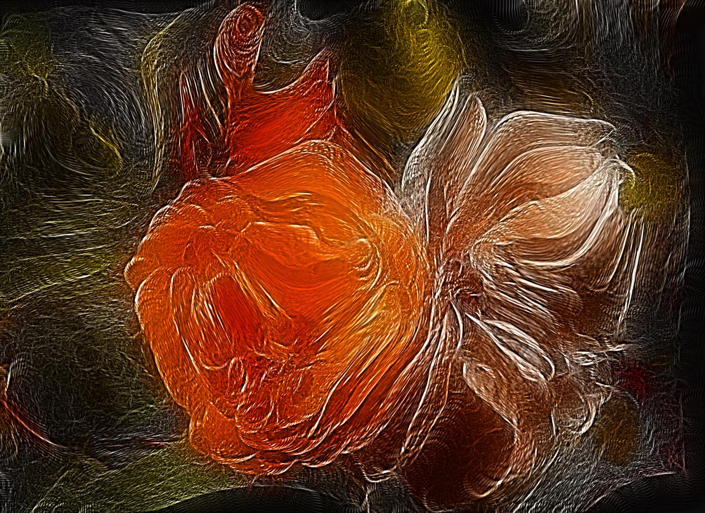 Rose / Abstrakt