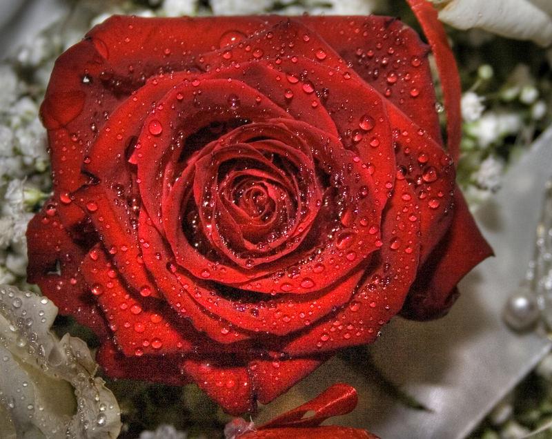 Rose auf Hochzeitsbankett
