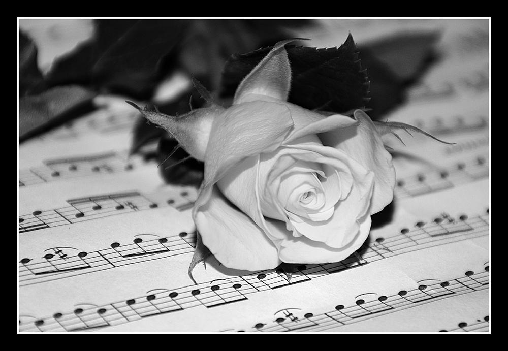Rose auf Noten