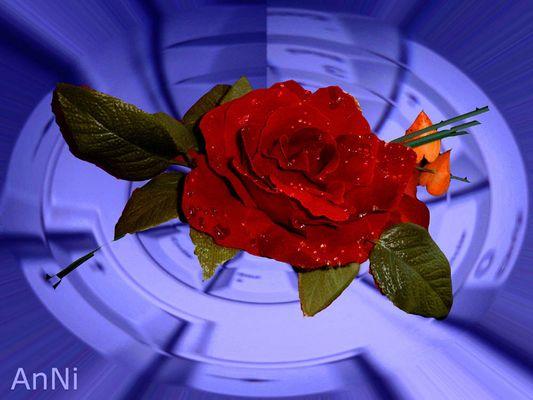 Rose auf Tastatur