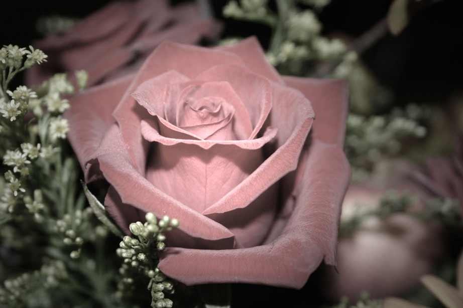 Rose aus einem Bouquet