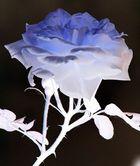 Rose aus Glas ?