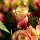 -rose-