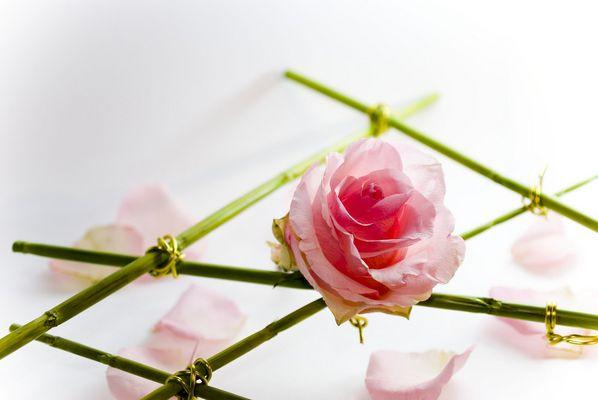 Rose Déco