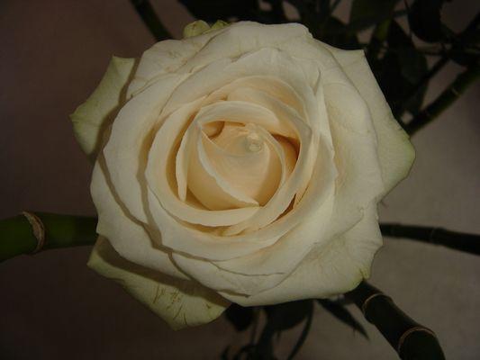 rose et bambous