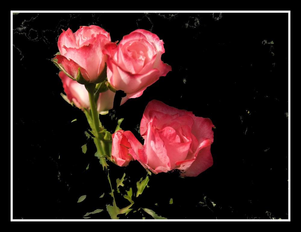 rose et noir
