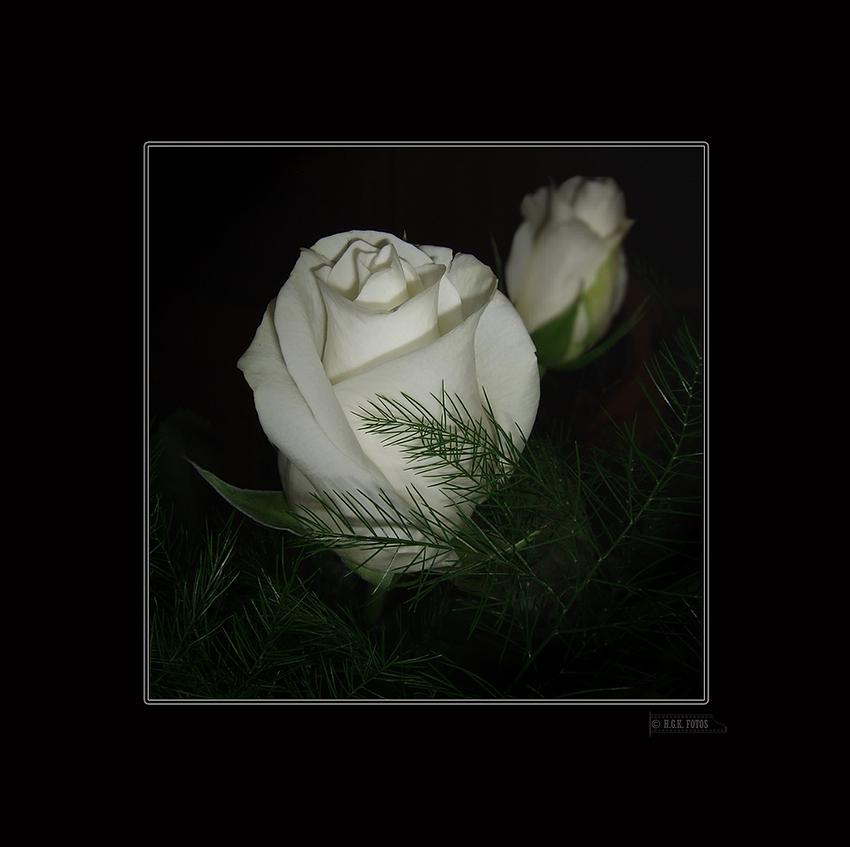 ~~Rose~~