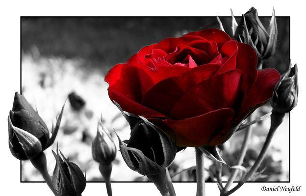 rose^^ <--Farbspiel
