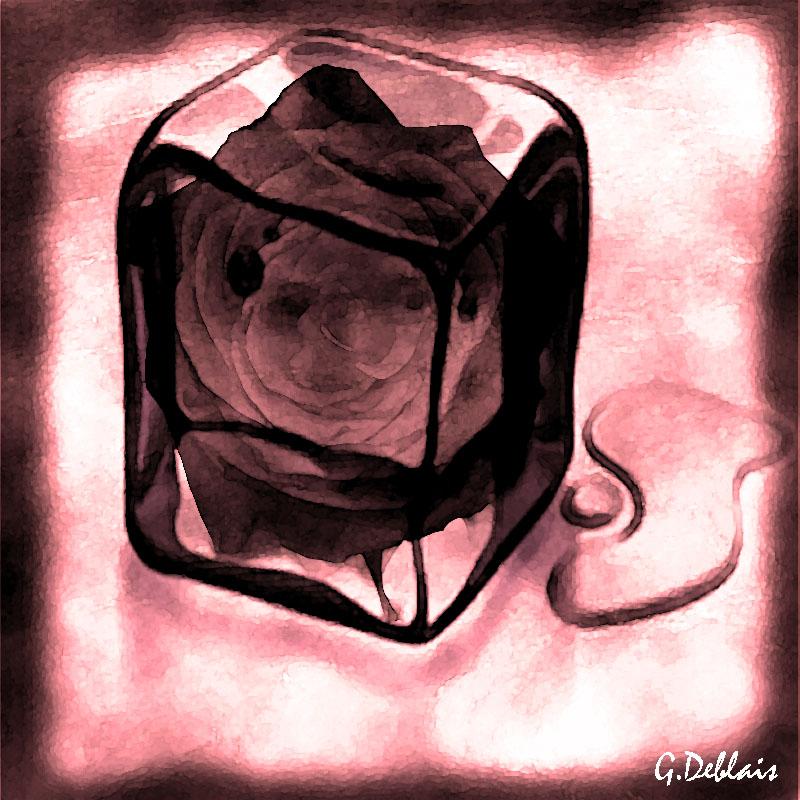 rose glacé