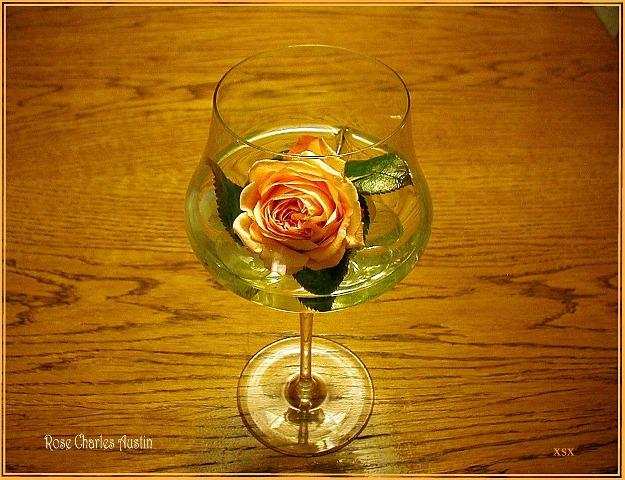 rose im glas foto bild stillleben zuf llige arrangements karten stillleben bilder auf. Black Bedroom Furniture Sets. Home Design Ideas