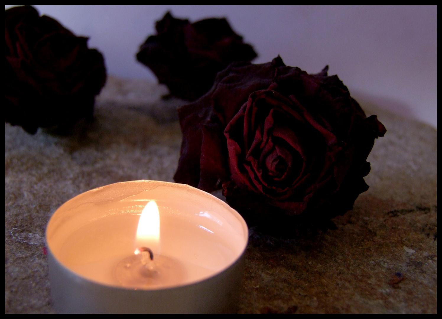 Rose im Licht