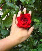 Rose in der Hand