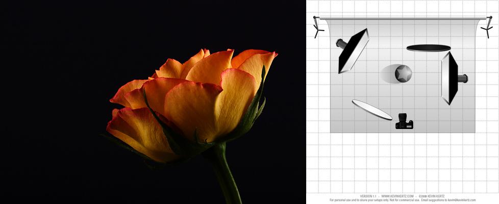 Rose + Lichtaufbau
