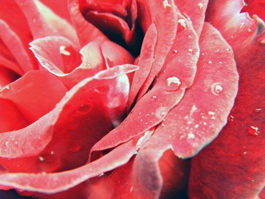Rosé matinale