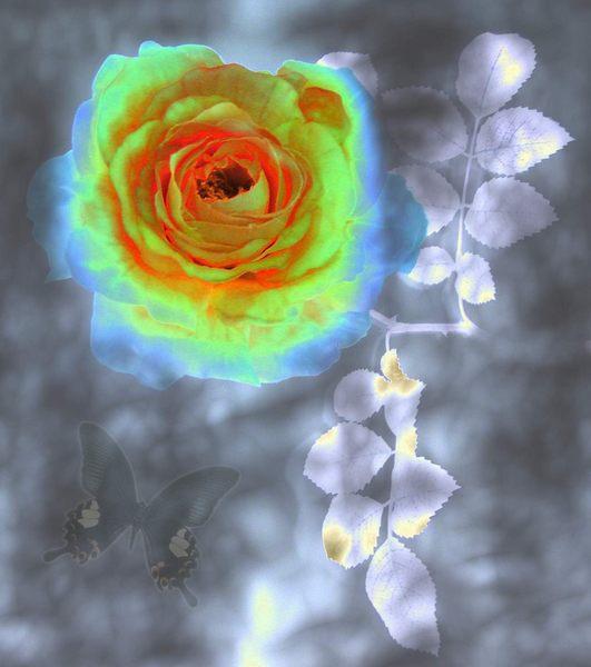 Rose-Metall