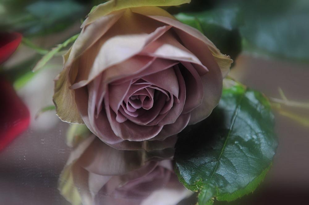 Rose miroir