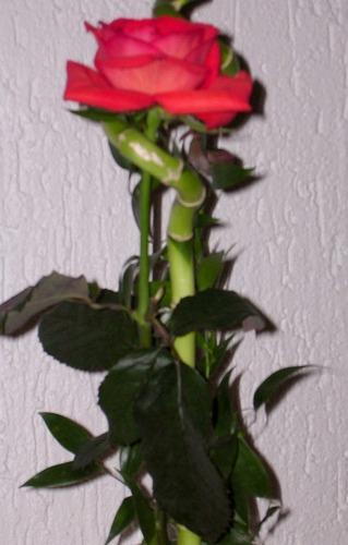 Rose mit Glücksbringer (Bambusstab)