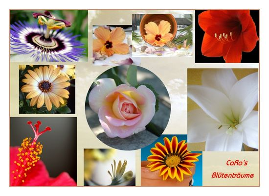 Rose mit neun Blüten